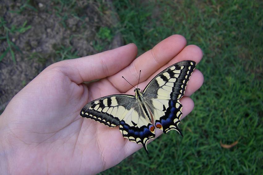 farfalle colorate matrimonio
